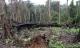 Nicaragua Timber Trafficking Devastates CentAm's Largest Forest Reserve