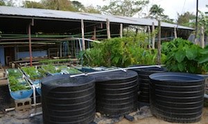 Erle Rahaman-Noronha's closed-loop aquaponics food system. Credit: Mark Olalde/IPS