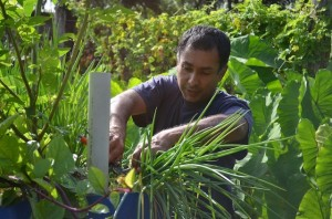Erle Rahaman-Noronha cutting produce on his farm. Credit: Mark Olalde/IPS